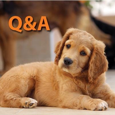 Real Estate IRAs Q&A