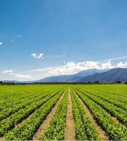 fertile-agricultural-field-of-organic-crops-in-california-picture-id507512896 (3)
